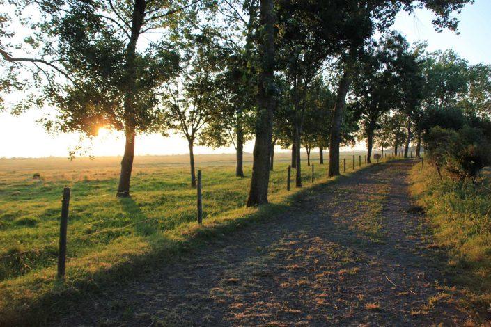 Les alentours du Gîte de Grand-Lieu, près du lac de Grand-Lieu dans le 44