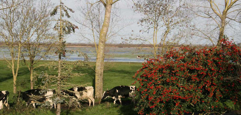 Le Gite de Grand-Lieu au bord du lac de Grand-Lieu