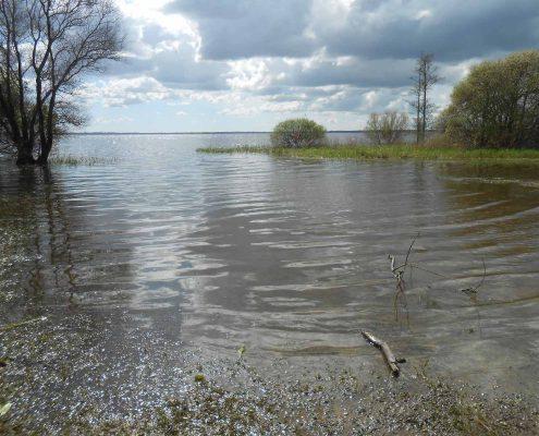 La visite du Lac de Grand-Lieu accolé au gîte de Saint Lumine de Coutais